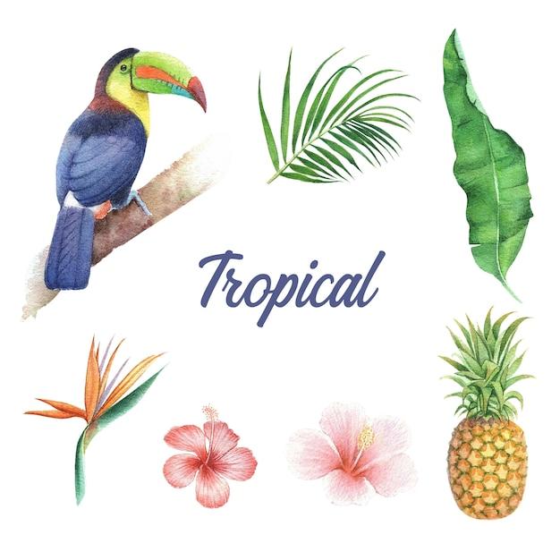 Projeto tropical com folhagem e pássaro, ilustração vetorial. Vetor Premium