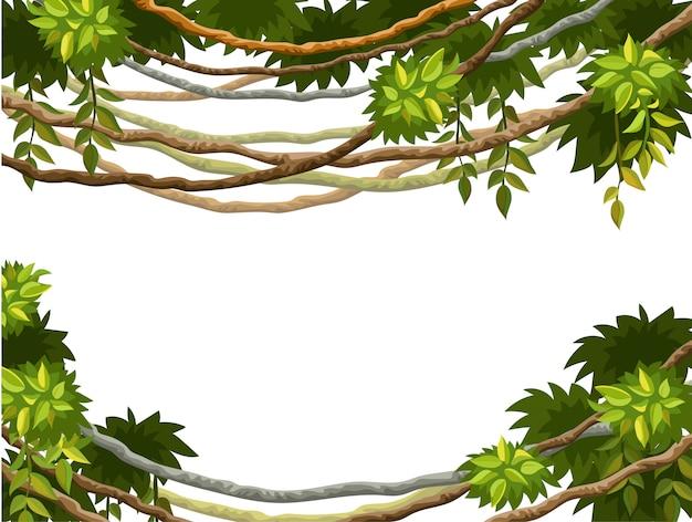 Quadro de galhos de liana e folhas tropicais Vetor Premium