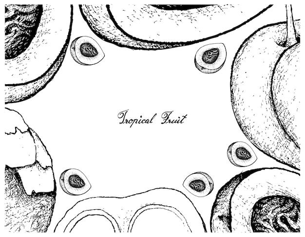 Quadro desenhado a mão de pêssego ou nectarina e açúcar de palma Vetor Premium