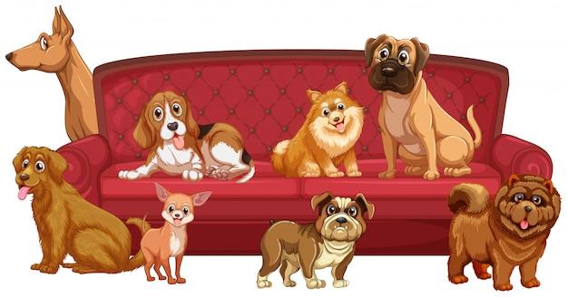 Raças de cães diferentes no sofá Vetor grátis