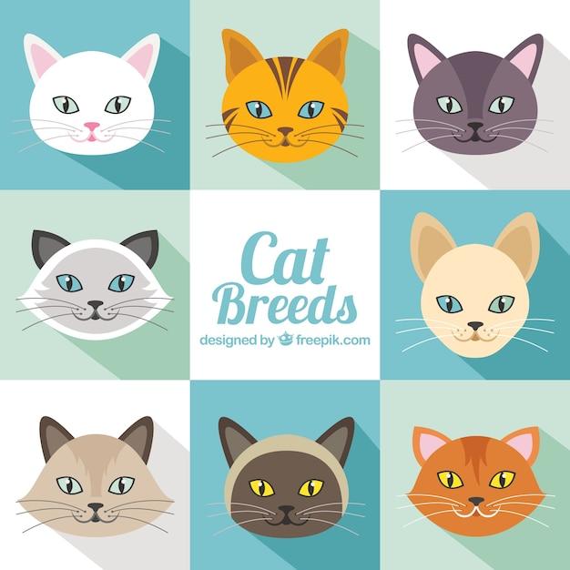 Raças do gato embalar em design plano Vetor grátis
