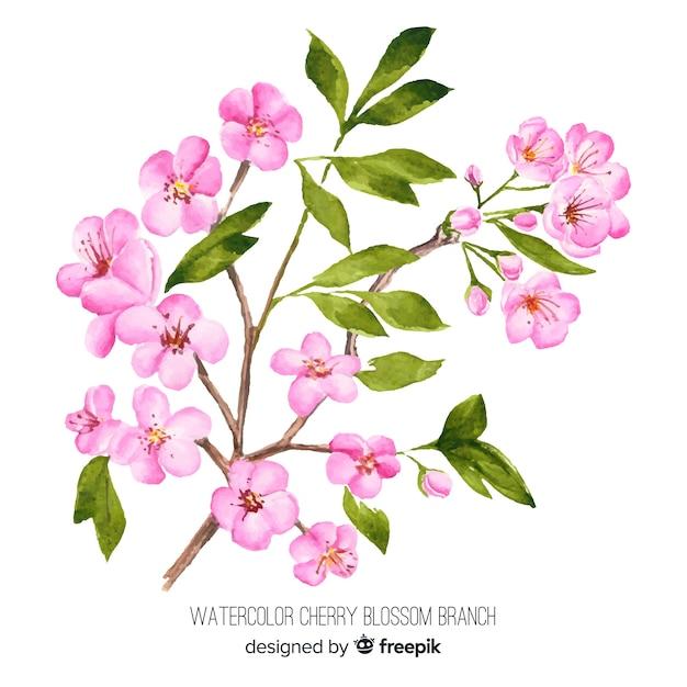 Ramo de flor de cerejeira em aquarela Vetor grátis