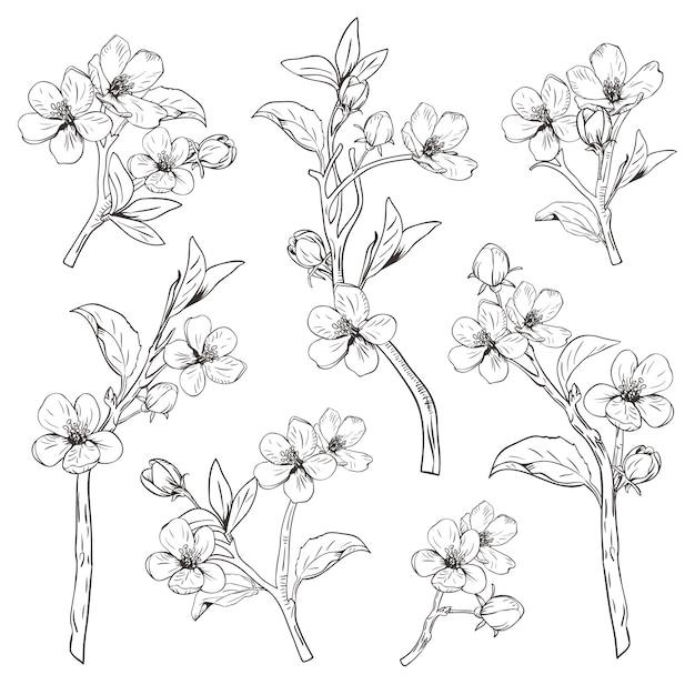 Ramos botânicos tirados mão da flor no fundo branco. Vetor Premium