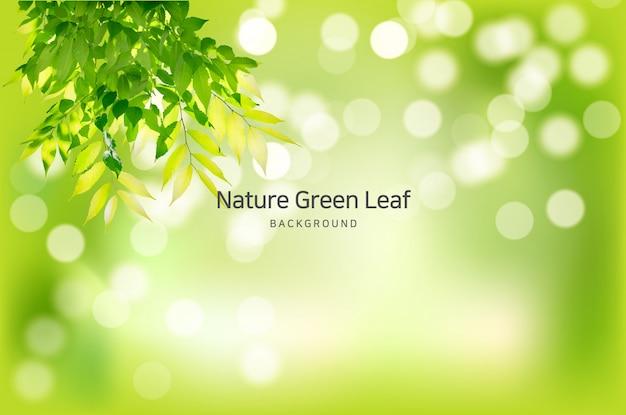 Ramos de fundo transparente primavera natural cristalina Vetor Premium