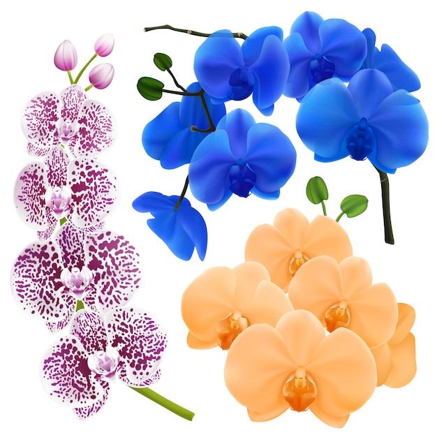 Ramos de orquídea com flores coloridas Vetor grátis