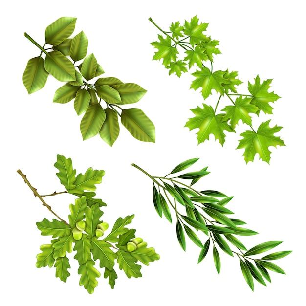Ramos verdes de árvores de folha caduca Vetor grátis