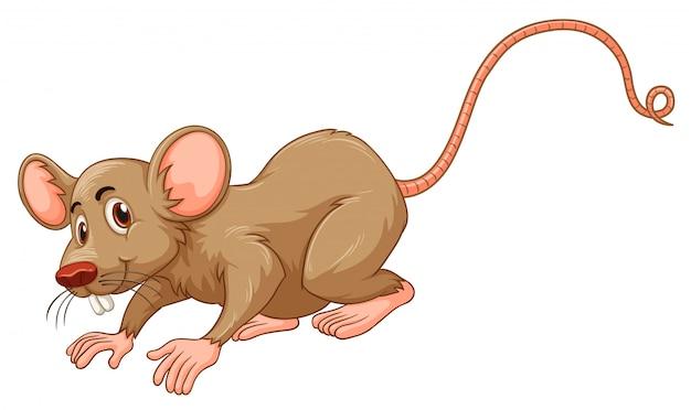 Ratinho com cara de boba Vetor Premium