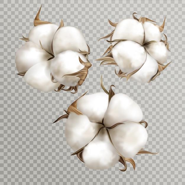 Realista algodão flores maduras abriram sementes de cápsula Vetor grátis