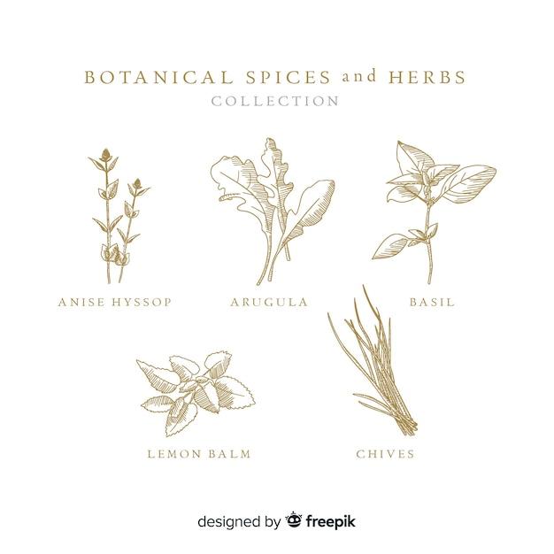 Realista mão desenhada especiarias e ervas botânicas Vetor grátis