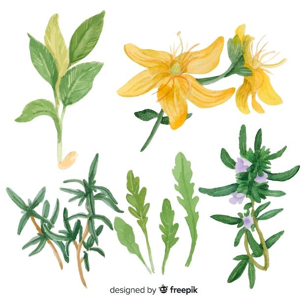Realista mão desenhada especiarias e ervas esboços coleção Vetor grátis
