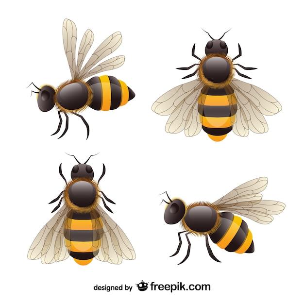 Realista vector set abelha Vetor grátis
