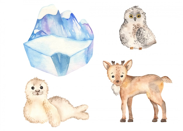 Rena de animais do ártico bonito, coruja, selo em estilo aquarela Vetor Premium