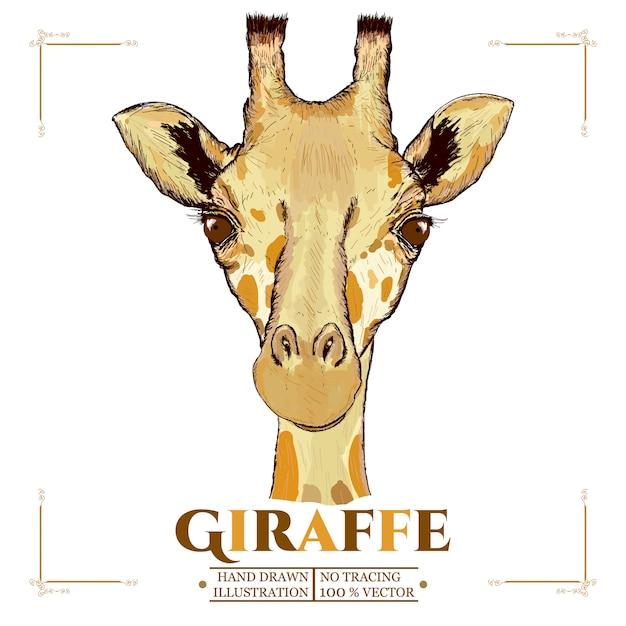 Retrato de girafa mão desenhada vectorized ilustração Vetor Premium