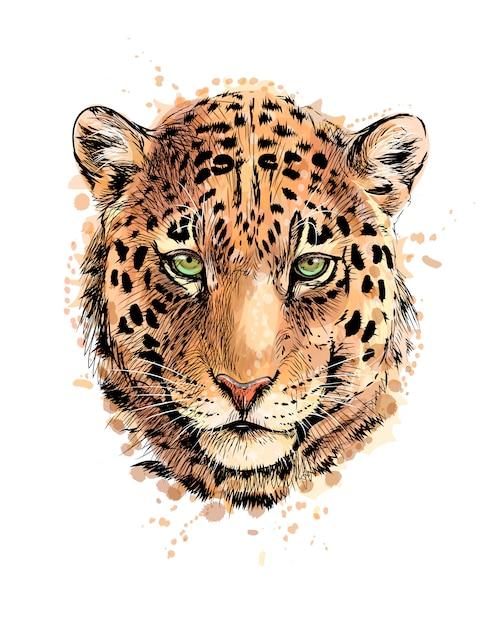 Retrato de uma cabeça de leopardo de um toque de aquarela, esboço desenhado à mão. ilustração vetorial de tintas Vetor Premium