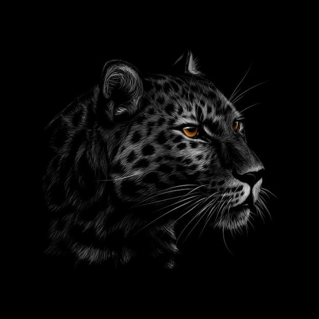 Retrato de uma cabeça de leopardo em um fundo preto. ilustração Vetor Premium