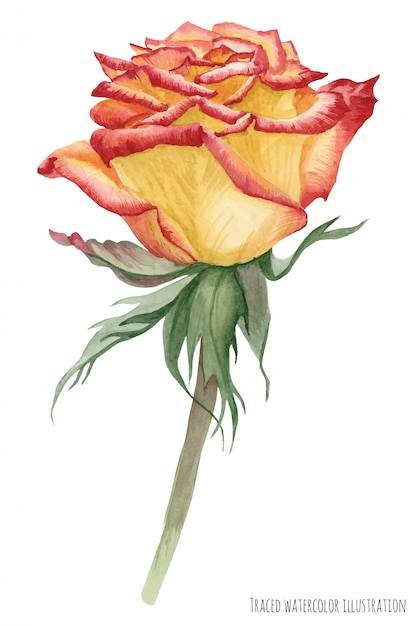 Rosa caribenha amarela Vetor Premium