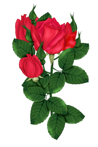 Rosa escarlate com tons brilhantes Vetor Premium