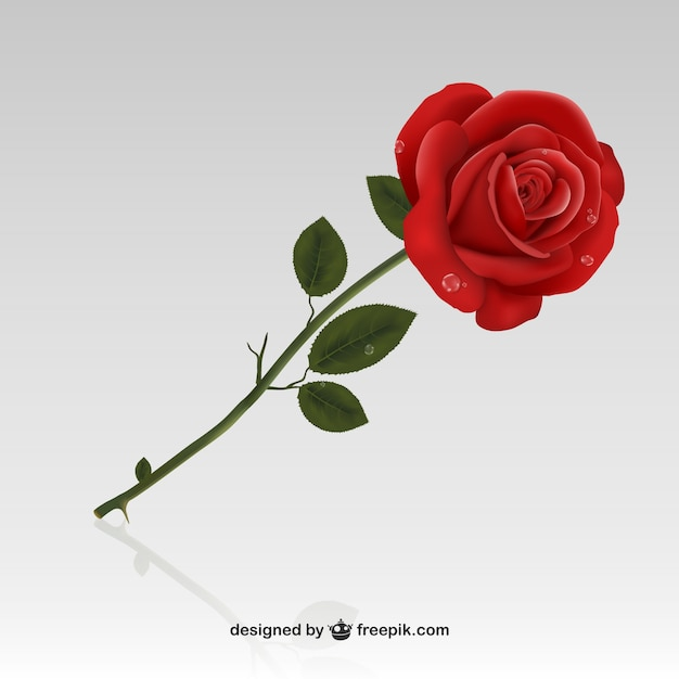 Rosa vermelha Vetor grátis
