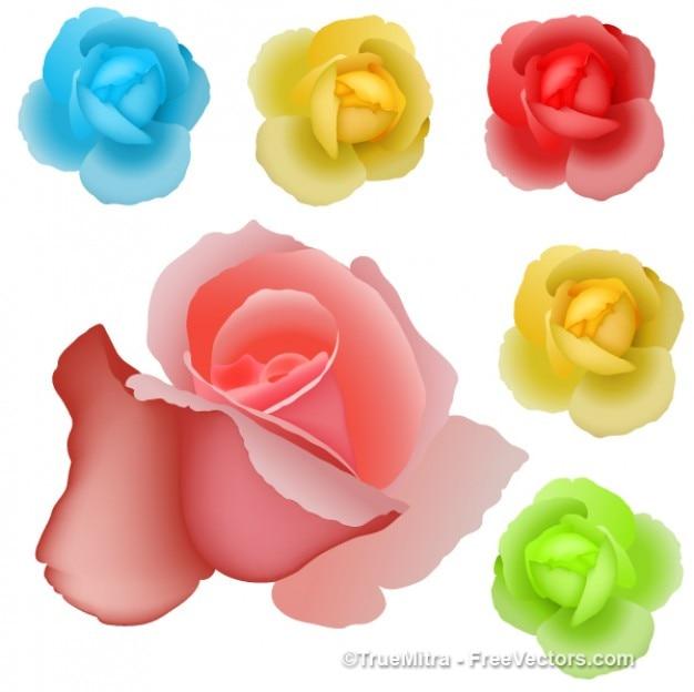 Rosas Coloridas Desenho Vetorial Vetor Gratis