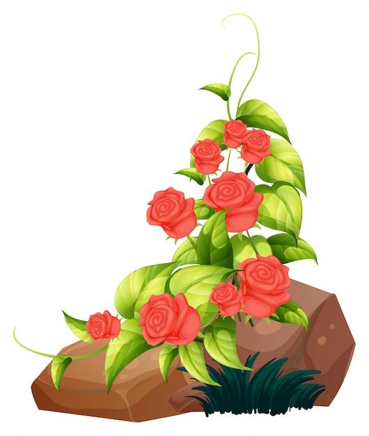 Rosas vermelhas e pedras em branco Vetor grátis