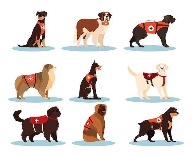 Salvadores de cães. coleção de cães cadáveres de várias raças para encontrar pessoas. animal de estimação doméstico bonito ajudando as pessoas. grupo de animais. Vetor Premium