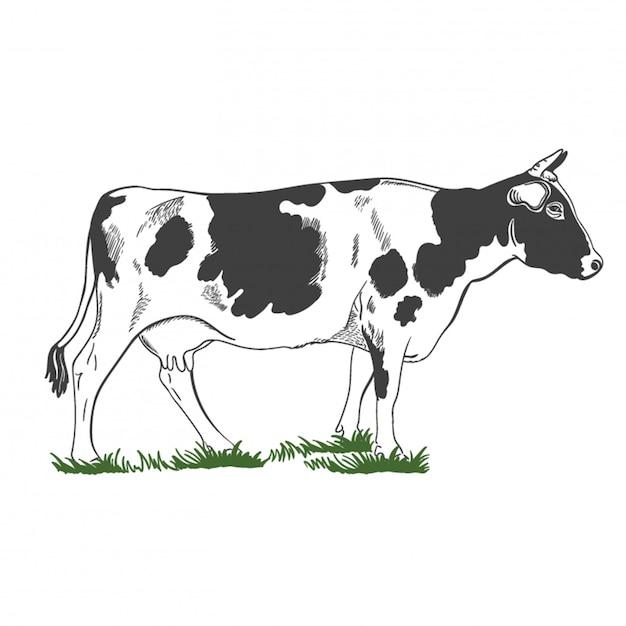Silhueta, figura de uma vaca com os chifres que estão na grama verde, ilustração. Vetor Premium
