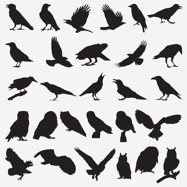 Silhuetas de corvo corvo Vetor Premium