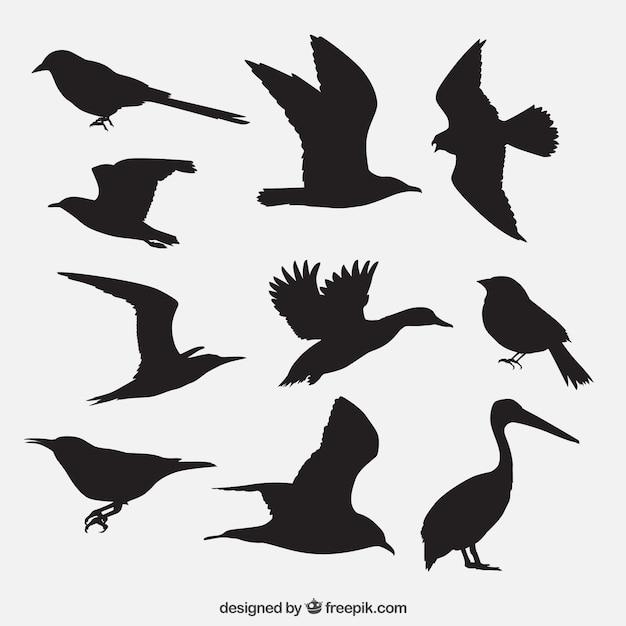 Silhuetas dos pássaros embalar Vetor grátis