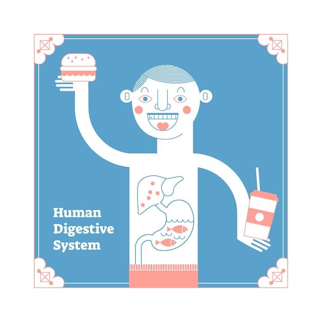 Sistema digestivo humano anatômico estilizado Vetor Premium