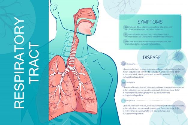 Sistema respiratório humano de vetor Vetor Premium