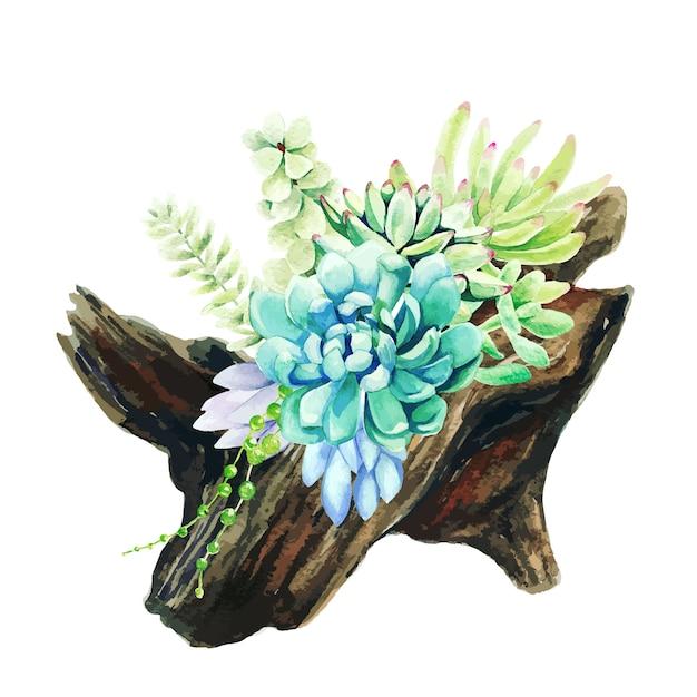 Suculentas aquarela brilhantes, crescendo no pote de madeira Vetor Premium