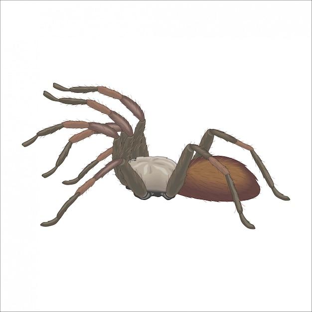 Tarântula de aranha na caça Vetor Premium