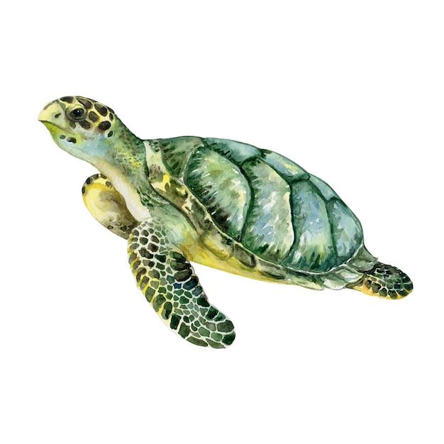 Tartaruga verde de mar isolada. aquarela ilustração Vetor Premium