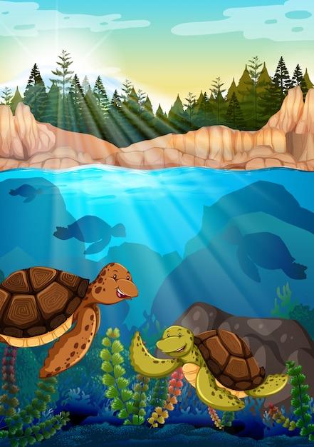 Tartarugas nadando sob o oceano Vetor grátis