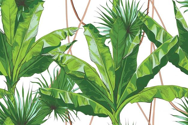 Teste padrão sem emenda textural da palma tropical das bananas do vetor. Vetor Premium