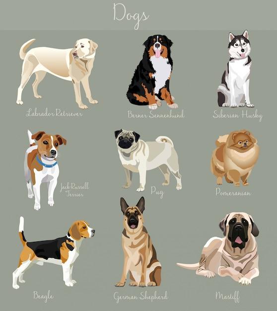 Tipo diferente de cães conjunto isolado Vetor Premium
