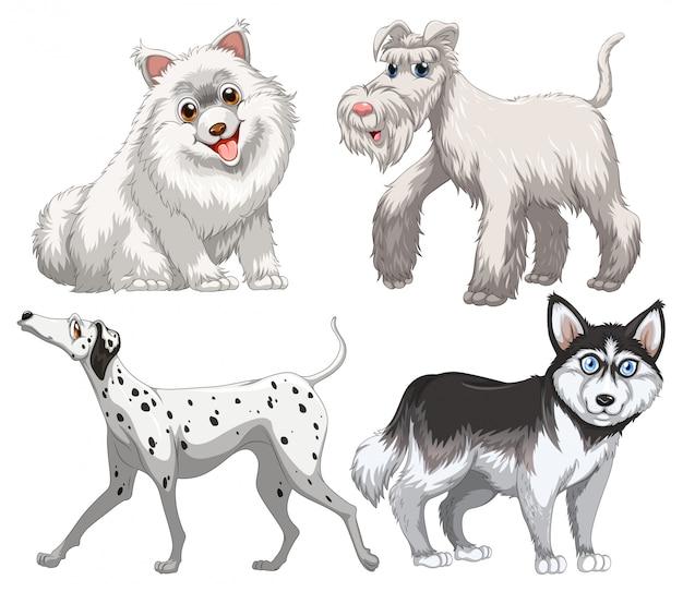 Tipo diferente de canino Vetor grátis