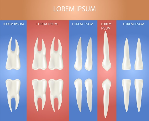 Tipo diferente de dente. cartaz 3d realístico Vetor Premium
