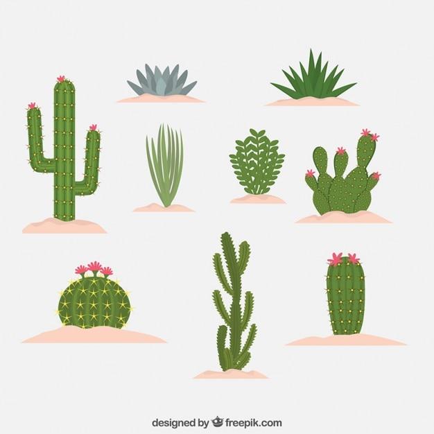 Tipo differents do design cactus Vetor grátis