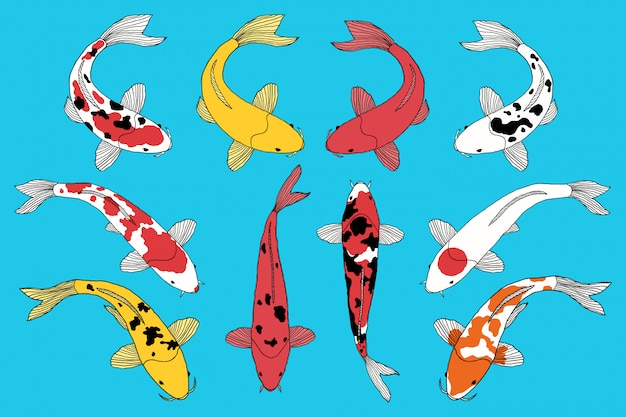 Tipos de peixes koi Vetor Premium