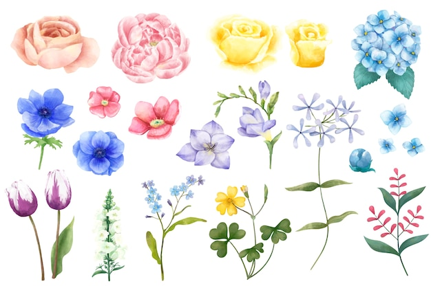 Tipos diferentes de flores ilustradas isoladas no fundo branco. Vetor grátis
