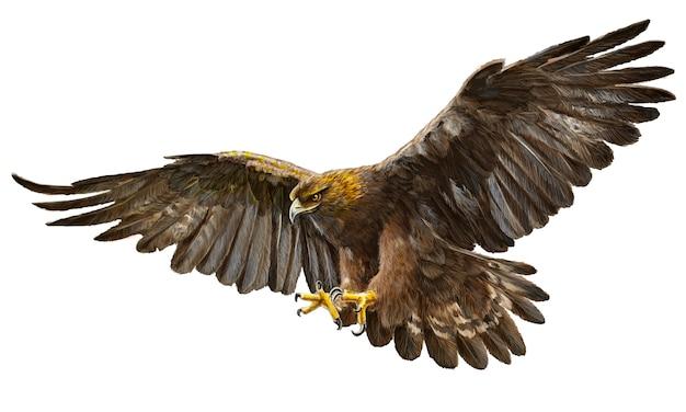 Tração da mão do vôo da águia dourada no fundo branco. Vetor Premium