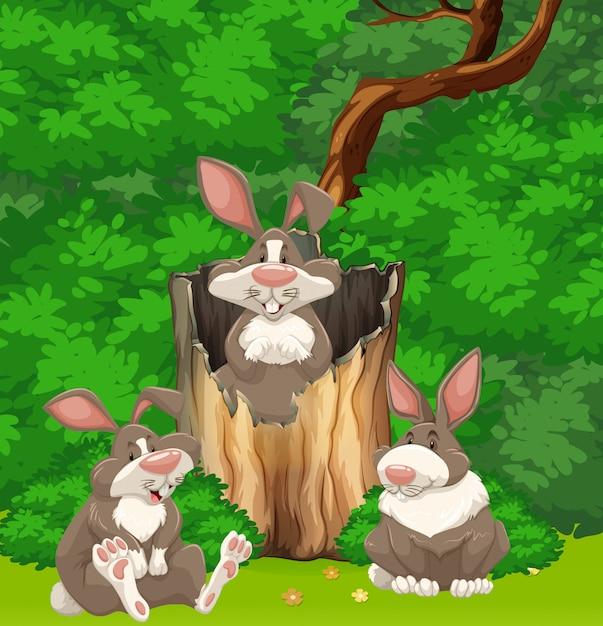 Três coelhos na floresta Vetor grátis