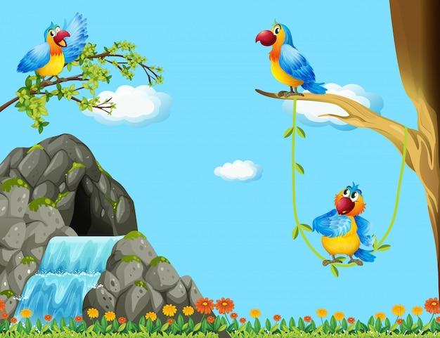Três papagaios que vivem na caverna Vetor Premium