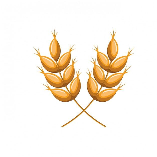 Trigo, folhas, isolado, ícone Vetor Premium