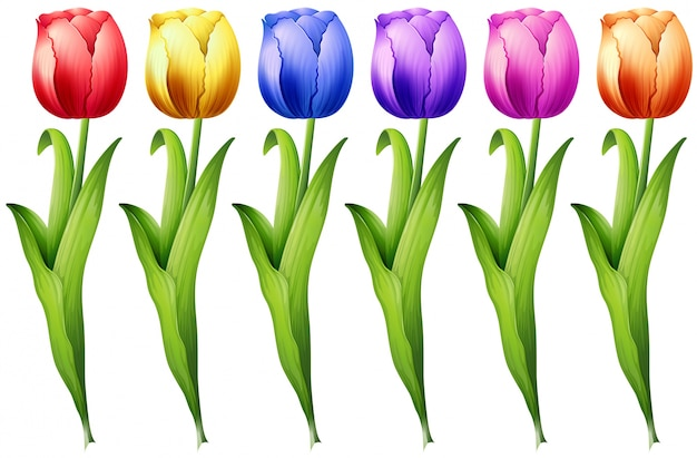 Tulipa Vetor grátis