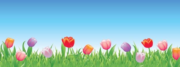 Tulipas bonitas para a primavera Vetor Premium