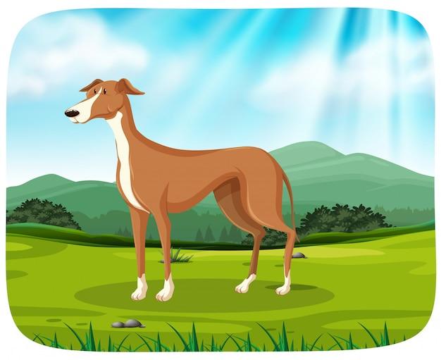 Um cão no parque Vetor grátis