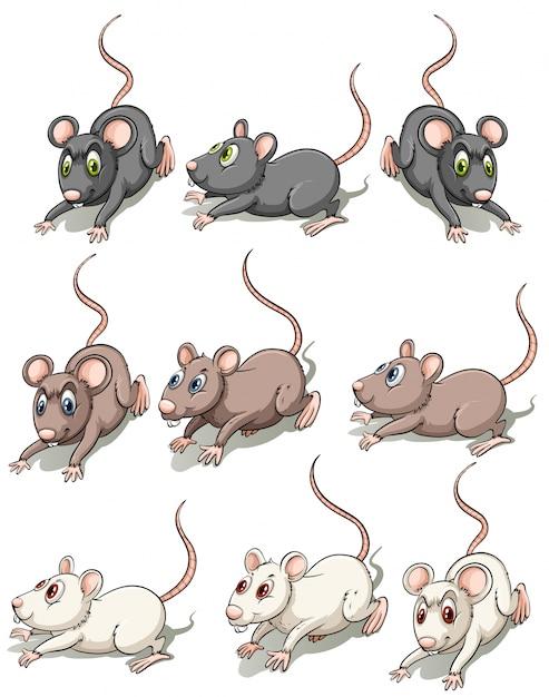 Um grupo de ratos Vetor grátis