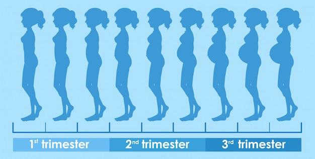 Um vetor de progresso da gravidez Vetor grátis